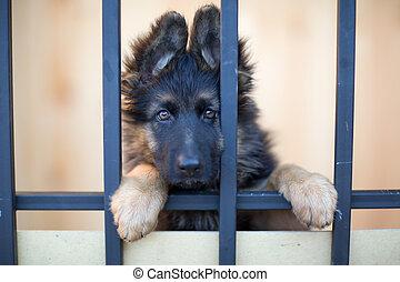 infeliz, perrito, atrás, barras, en, refugio,