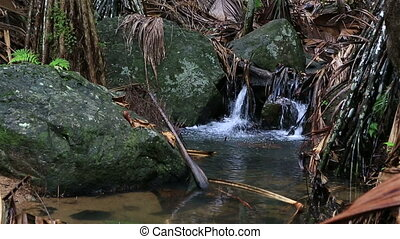 Clear stream in Vallee de Mai Nature Reserve in Praslin...
