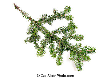 Pine fur tree branch on white for Christmas decoration