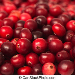 cranberry - Close up of ripe cranberries, selective focus,...