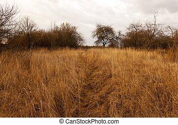 dried grass - the dried grass in an autumn season. cloudy...