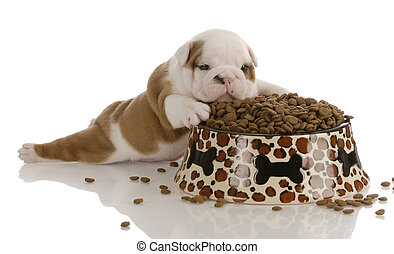 small bulldog puppy laying beside large bowl of dog food