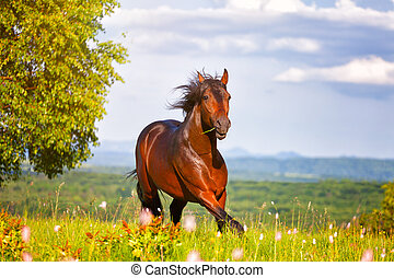 hermoso, caballo, saltos, en, Un, verde, pradera,