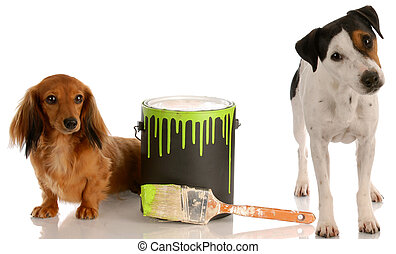 bad dog - dachshund and jack russel terrier with paint can