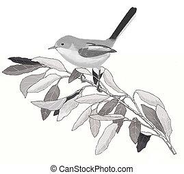 Blue-gray Gnatcatcher on oak - Polioptila caerulea