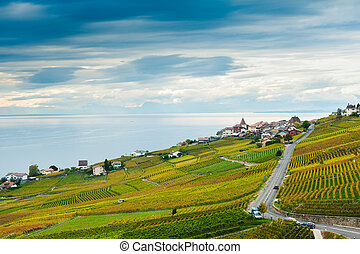 Lavaux vineyards in autumn, Switzerland