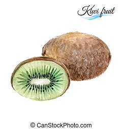 Kiwi - Watercolor fruit kiwi isolated on white background