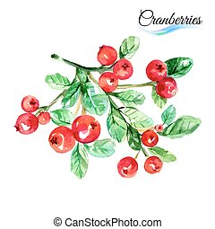 Cranberries - Watercolor fruit cranberries isolated on white...