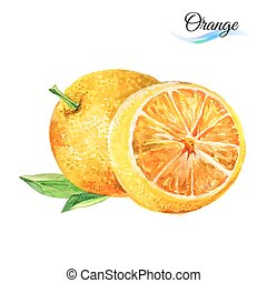 Orange - Watercolor fruit orange isolated on white...