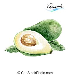 Avocado - Watercolor fruit avocado isolated on white...