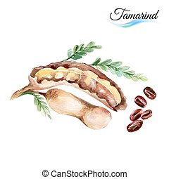 Tamarind - Watercolor tamarind isolated on a white...