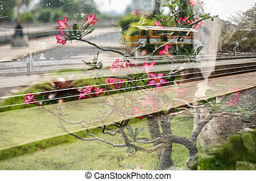 Double exposure train and Frangipani.