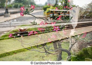 Double exposure train and Frangipani.