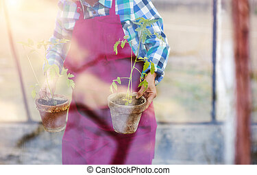 Senior woman planting seedlings into a greenhouse