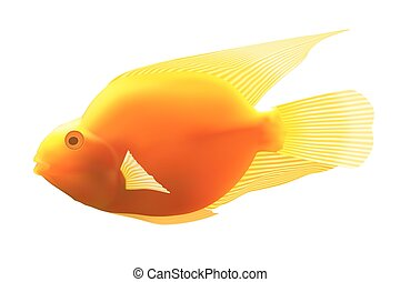 Yellow fish Vector illustration