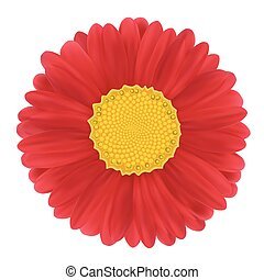 Red Gerbera, flower. Vector illustration