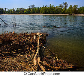 Ticino River - View of dead trees in the Ticino river, Italy