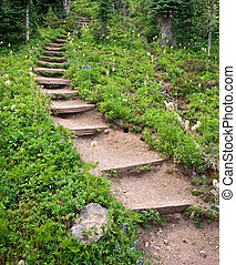 Winding Steps - A forest path becomes a series of winding...