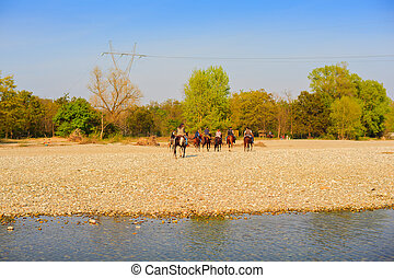 Horses, ticino river - View of horses in the Ticino river,...