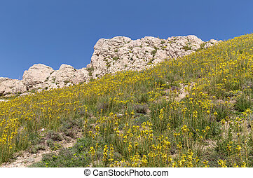 flowers on the hillside - mountainside with yellow flowers...