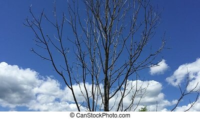 Tree landscape, blue sky with clouds