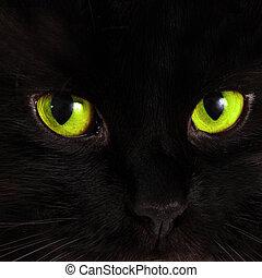 pretas, gato, olha, em, tu, com, luminoso, verde, olhos,