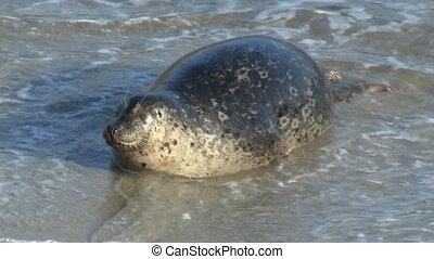 Wild Seal On Beach