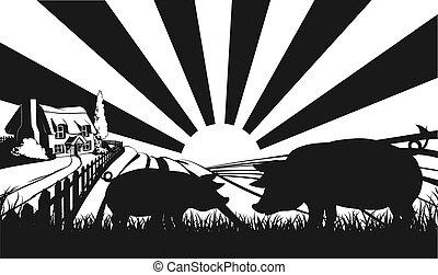 Pigs in silhouette in farm field