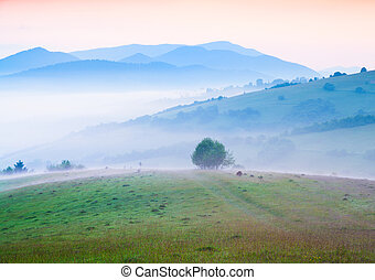 Early morning in the foggy Carpathian mountains