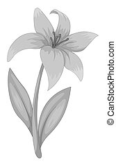 Lily flower in black and white