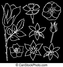 Set of beautiful flowers, vector illustration, drawn doodle