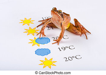 Frog as a weather prophet makes the weather forecast,...