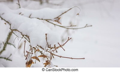 snow-covered branch