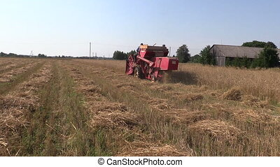 harvester barley field - red small farm harvester work in...