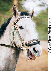 Funny Brown Horse Close Up Head