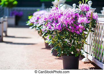 Fresh colorful blooming flowers in spring garden