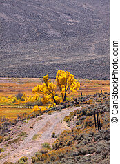 Yellowstone national park - Autumn tree in Yellowstone...
