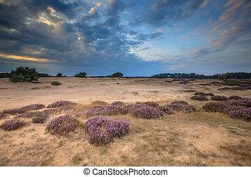 Hoge Veluwe Sandy Heathland - Heathland and shifting sands...