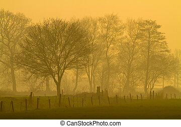 Yellow landscape during misty morning sunrise - Mysterious...