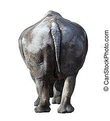 white rhinoceros(Ceratotherium simum). Isolated over white