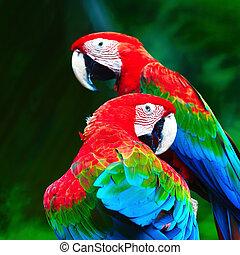 Greenwinged Macaw - Beautiful parrot bird, Greenwinged...