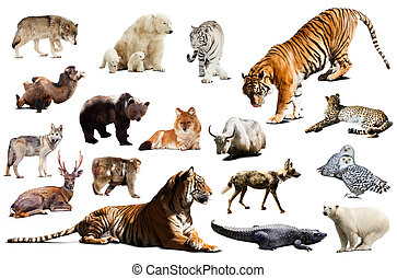 Tiger and other asian fauna Isolated on white background