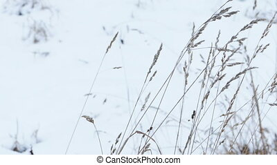 Dry Grass Under Snow, Slider Shot
