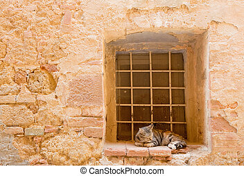 The rest of the cat on the window in Pienza, Tuscany
