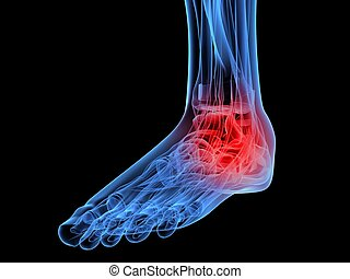 painful foot - 3d rendered x-ray illustration of a skeletal...