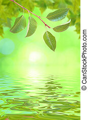 Beautiful green leaves in spring with reflection