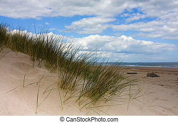 Northumberland Coast - Sand dunes and grass Cresswell beach...
