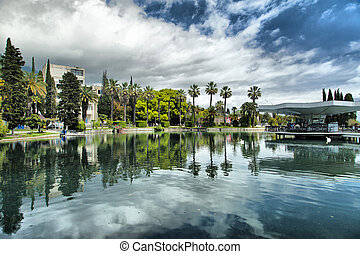 City pond in an environment of palm trees waiting for...
