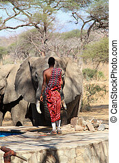 Massai guard and wild elephant - Massai guard protects...