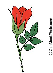 Bright red rose flower spring vector illustration isolated on white background